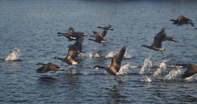 USA 10 : Chesapeake Bay